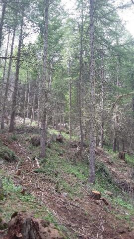 Charte forestière